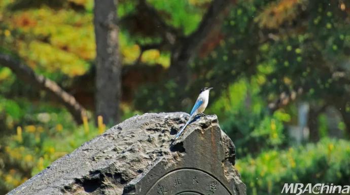 时而乖巧灵动 时而淘气顽皮 可爱的鸟儿们 是大自然的惊喜 也是东大