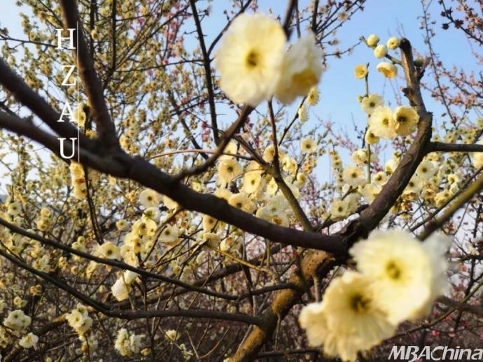 华中农业大学:桃花烂漫时,她在丛中笑